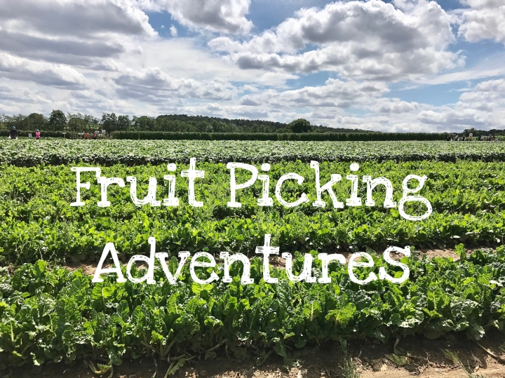 Fruit Picking Adventures