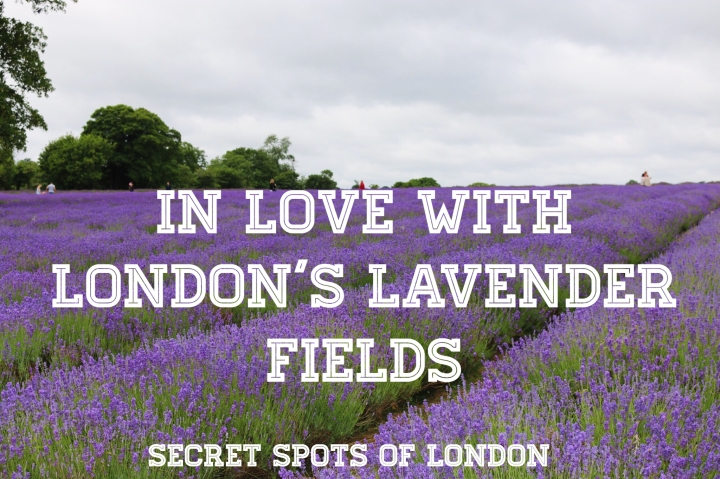 Secret Spots of London – In Love with London's Lavender Fields
